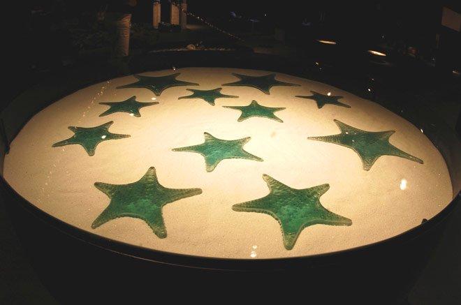 Pocinhas de Estrelas (2004)